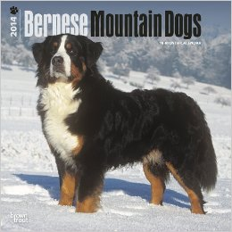Bernese Mountain Dog Gifts: 2014 Calendar